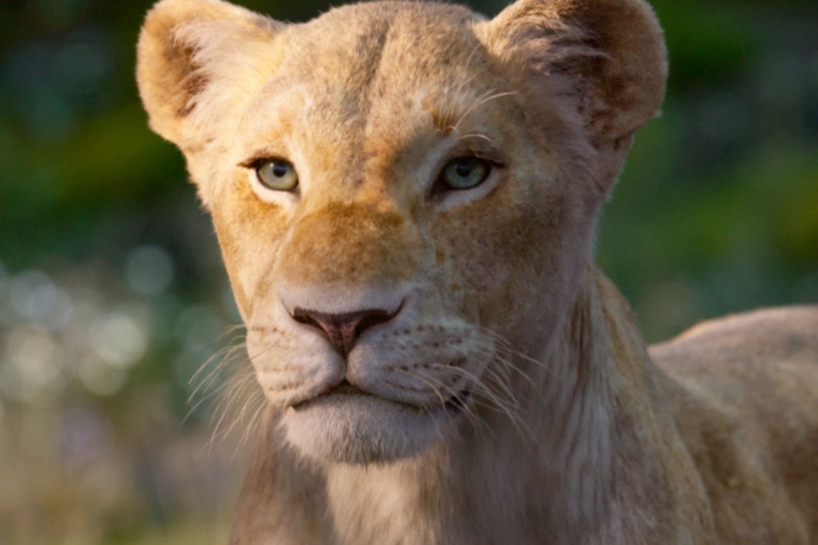 Watch Beyoncé As Nala In This New The Lion King Trailer