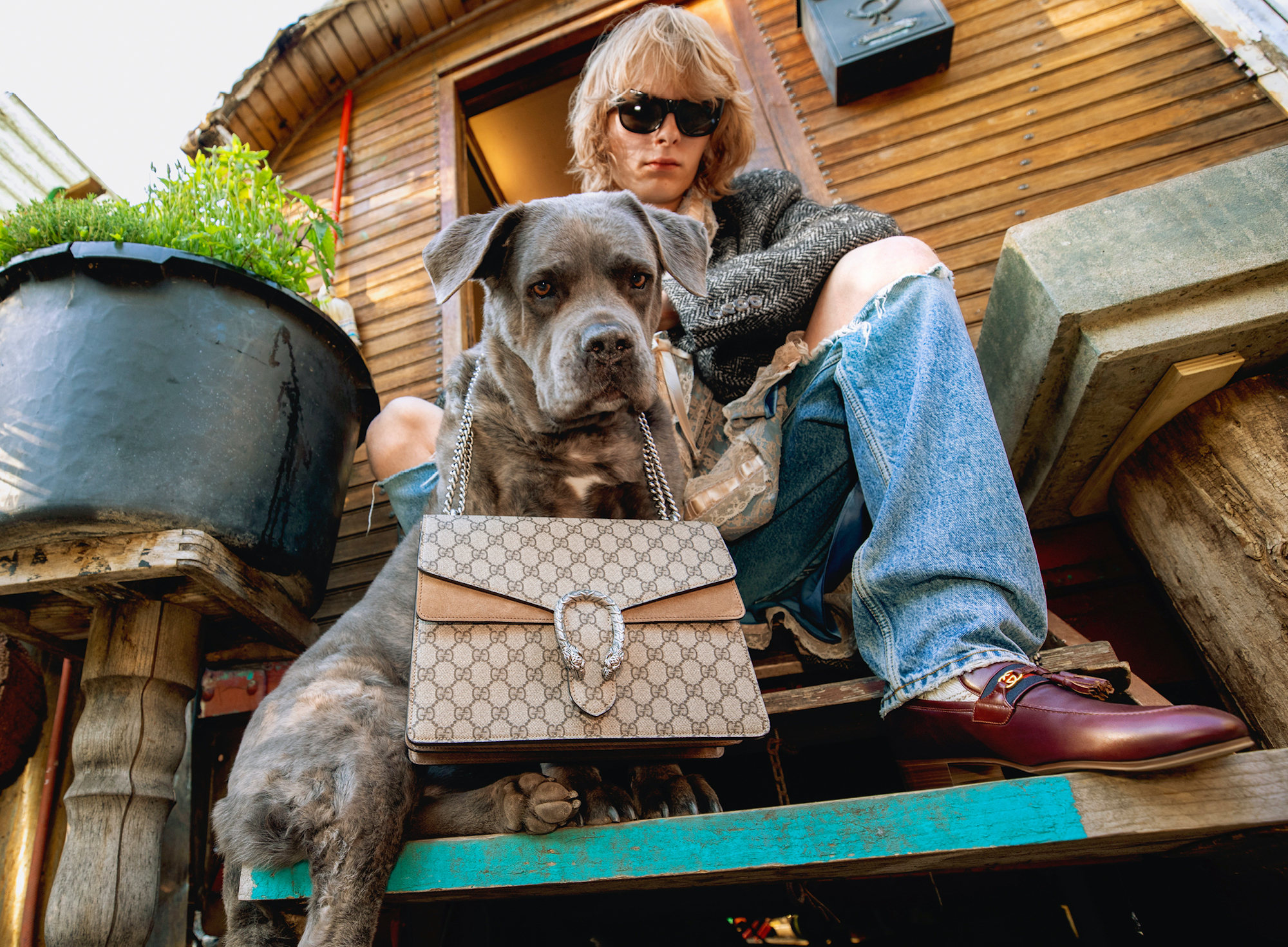 Gucci AW20 Campaign dog with gucci bag